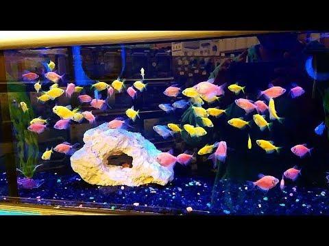 Girlfriend buys her FIRST AQUARIUM FISH PETS!