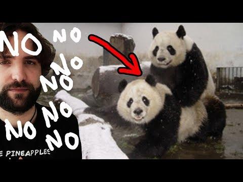 Quello che NON volevi sapere sul panda - SCIENZA BRUTTA