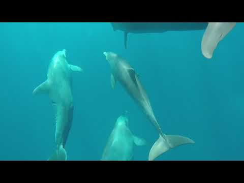 Mauritius island Swim and play with dolphins