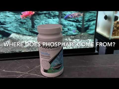How To Remove Brown Algae/Diatoms From The Aquarium