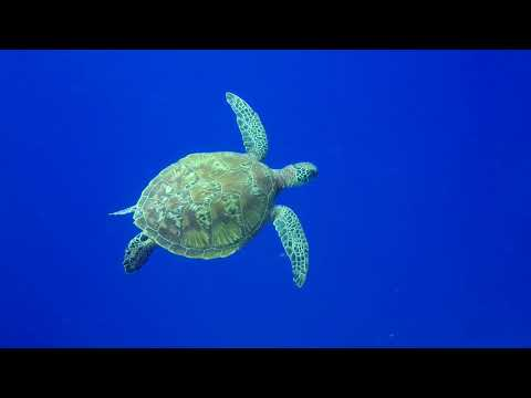 FREE DIVING GUAM featuring all the good spots!
