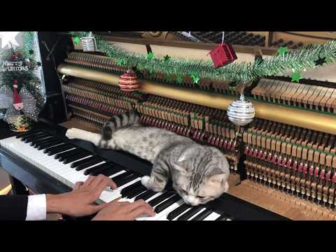 Silent Night Piano - Christmas Time For Meow With Meowssage
