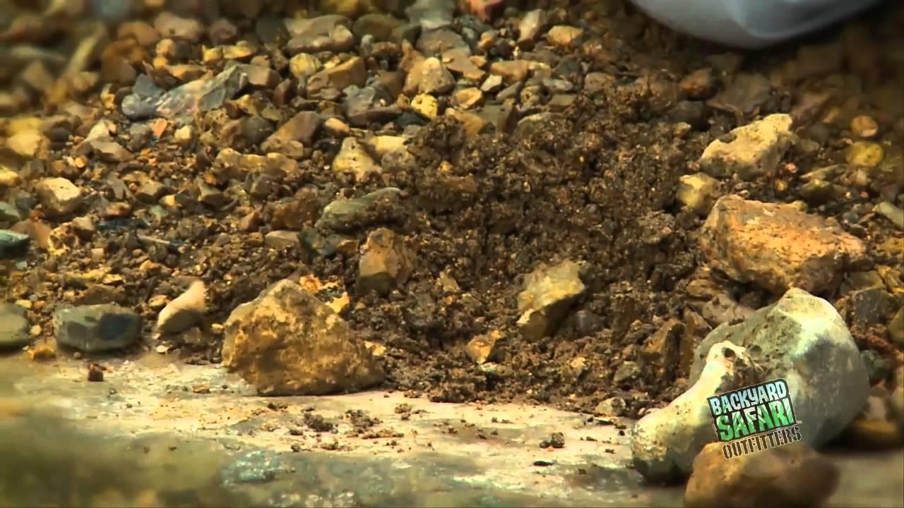 backyard safari rock excavator filmdog media youtube