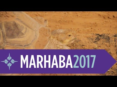 Get out of the NYUAD bubble - Marhaba 2017