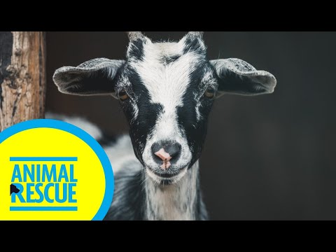 Animal Rescue - Season 2, Episode 14