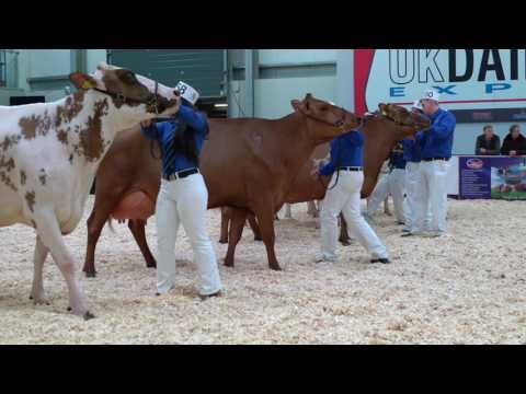 Martha - Ayrshire Grand Champion at 2017 UK Dairy Expo.4K Video