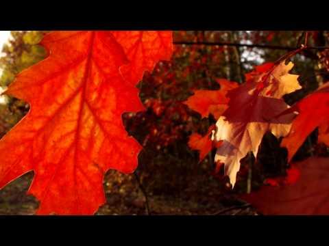 Stare Dobre Małżeństwo - Jesień