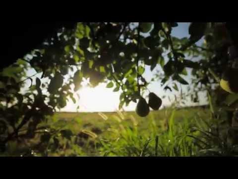 Teaser Ravifruit