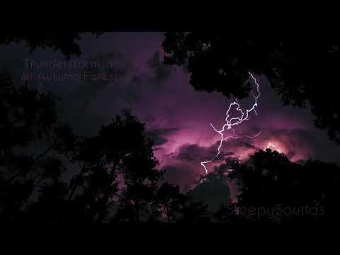 Thunderstorm in Autumn Forest – 10 Hours of Crickets, Rain and Thunder – Sleep Sound