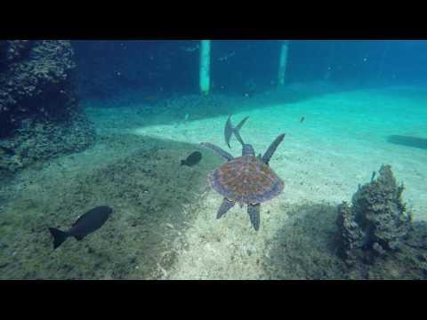 Cayman Turtle Farm, Grand Cayman