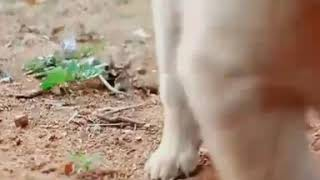 #Bairavaa Bgm Cute 🐕 Best video Forever