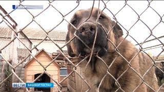 В Уфе ищут способ усыплять меньше бездомных собак и кошек