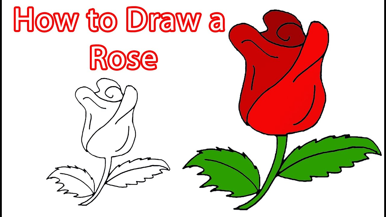 How to Draw a Rose - YouTube
