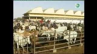 Projet d'Appui à l'Elevage (PAPEL-Sénégal)