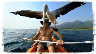 ПРИКОЛЫ С ПТИЦАМИ (FUNNY BIRDS), приколы с животными (fun with animals) #475