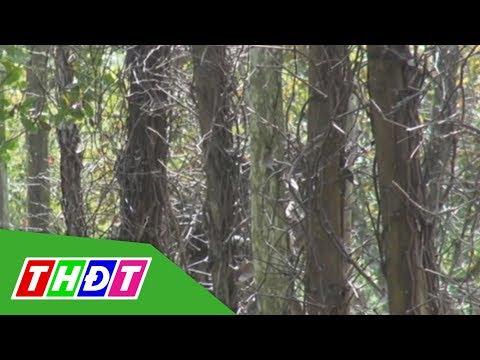 Tiêu chết trên diện rộng, nông dân Đắk Nông điêu đứng | THDT