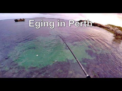 Eging In Perth, WA