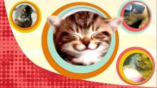 why cats can t taste sweets bytesize science