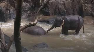 6 elephants die trying to save each other at Thai waterfall
