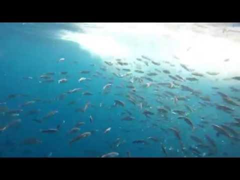 WONDERFUL UNDERWATER VIDEO-TUNA REVEL