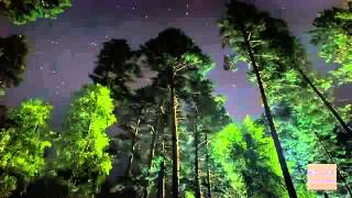 RELAXING NIGHT FOREST SOUND   Sleep Relaxation Forest Night Sleep Background Sound by RELAX CHANNEL