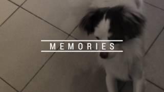 Память о моей любимой собаке