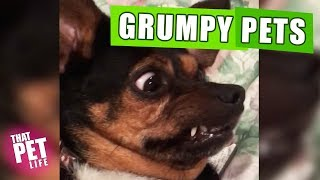 Grumpy Pets 😾🙅🏻‍♂️ | Funny Animal Compilation