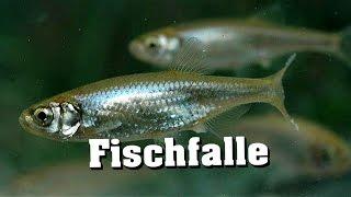 30 Sekunden Fischfalle