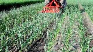 garlic weeding machine