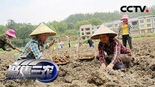 《聚焦三农》 20190517 小农户如何对接大市场| CCTV农业