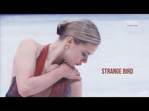 Anna Pogorilaya ● Strange bird