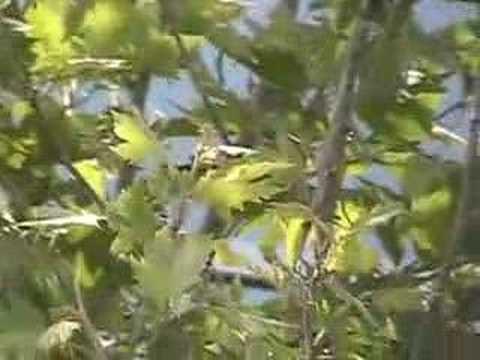 Fresno California Bird Walk