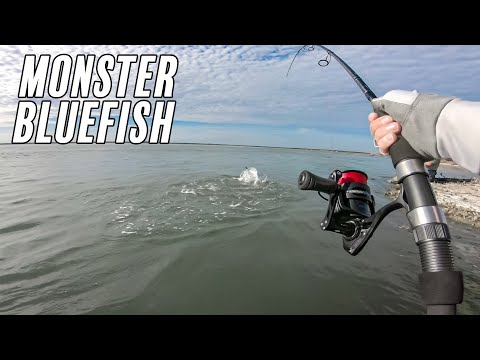 MONSTER BLUEFISH ARE HERE - 2020 - SURF FISHING - LONG ISLAND, NEW YORK