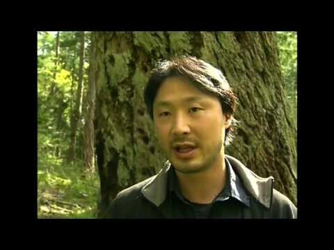 CTV - Environmental Law Centre Proposes BC Old-Growth Act