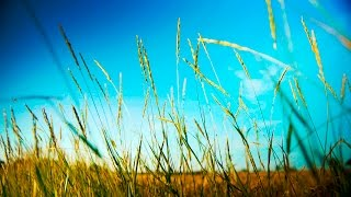 Slow Smooth Soothing Instrumental Music -- for relaxing, studying, work -- relaxdaily N°063