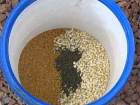 How To Make Homemade Organic Gmo Free Chicken Feed Youtube