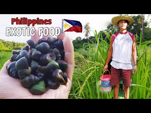 COOKING LEDDEG(mystery snail) FOR BREAKFAST | PROMDI BOY | LIFE IN THE PROVINCE