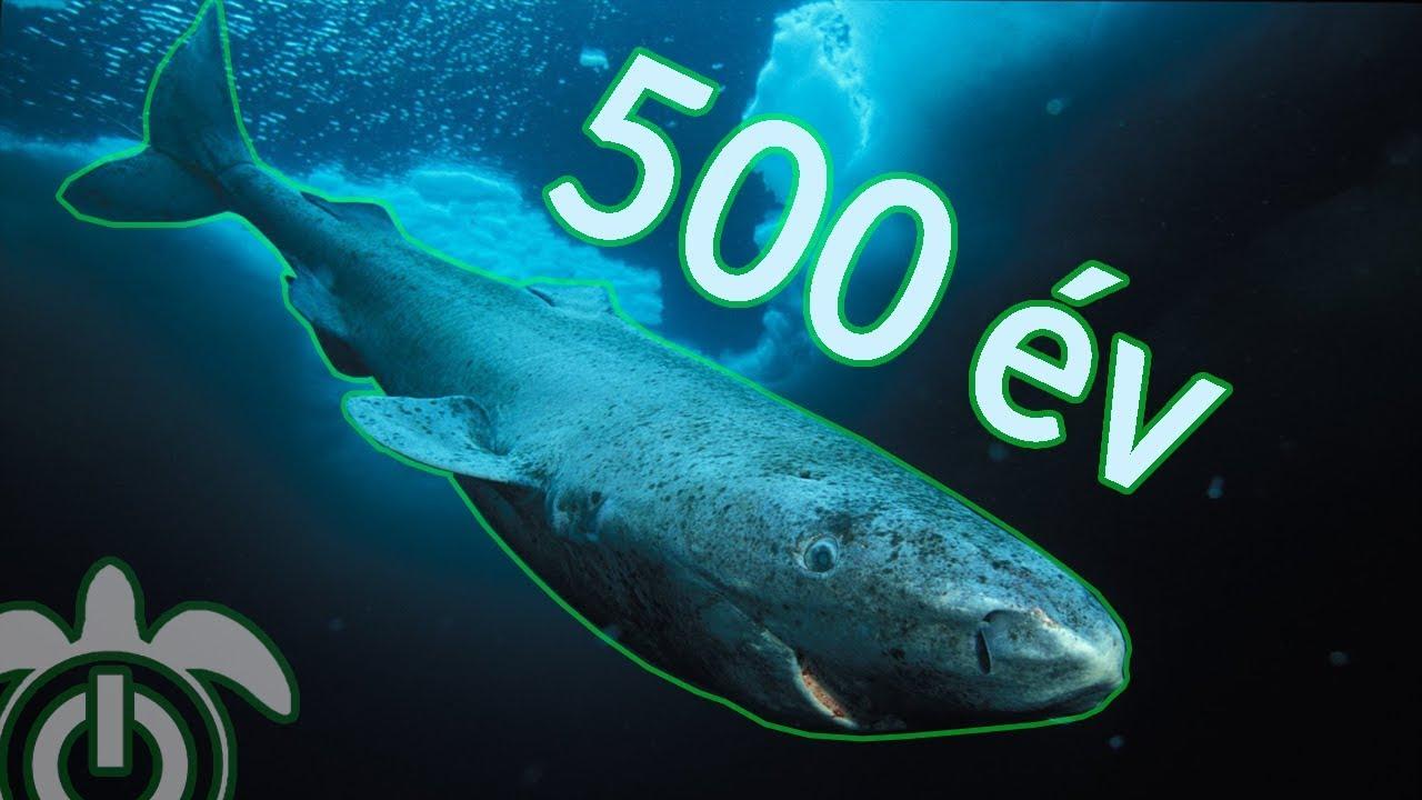 a cápa tartály bitcoin kereskedő