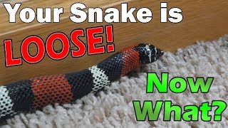 What to do if your Snake Escapes