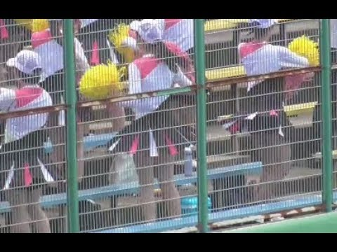 JKチアガール・TWICEも唖然のダンス応援に胸ズキュン!全国高校野球甲子園予選2018