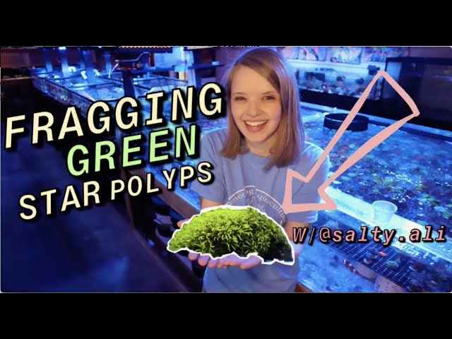 HOW to FRAG Green Star Polyps (GSP) with Salty Ali