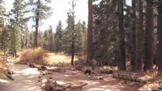 Long Valley Creek trail on Mount San Jacinto