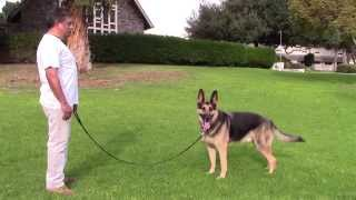 Sirius K9 Academy Basic Obedience Test Demonstration - Sit In Front