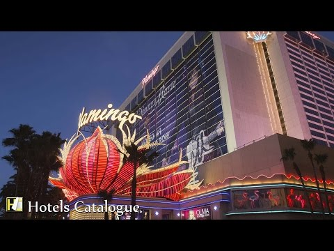 Fear And Loathing In Las Vegas The Flamingo Hotel Room from YouTube · High Definition · Duration:  2 minutes 35 seconds  · 140 000+ views · uploaded on 08/04/2013 · uploaded by MesiterSode
