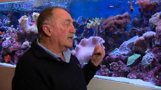 FISH TALES  episode Tank of the Week  Peters Reef Aquarium part 1 of 2