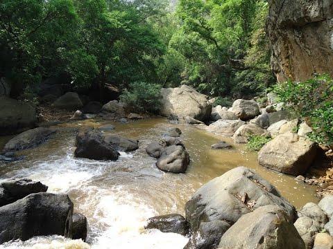 கொல்லிமலை இரசவாத காயகற்ப மூலிகைகள் இரகசியம் - Siddha Medicine