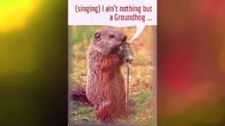 Groundhog Day Funnies