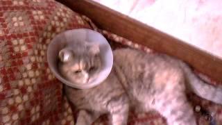 Кошка+клизма.