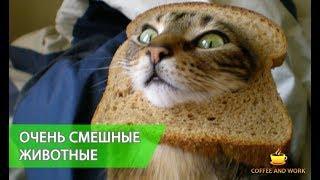 Приколы с животными. Смешные коты и собаки