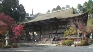 滋賀県 湖南三山 常楽寺の紅葉1 本堂